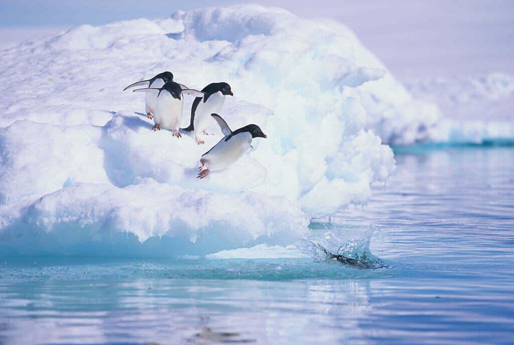 adelie_pinguine_auf_eisberg02_l